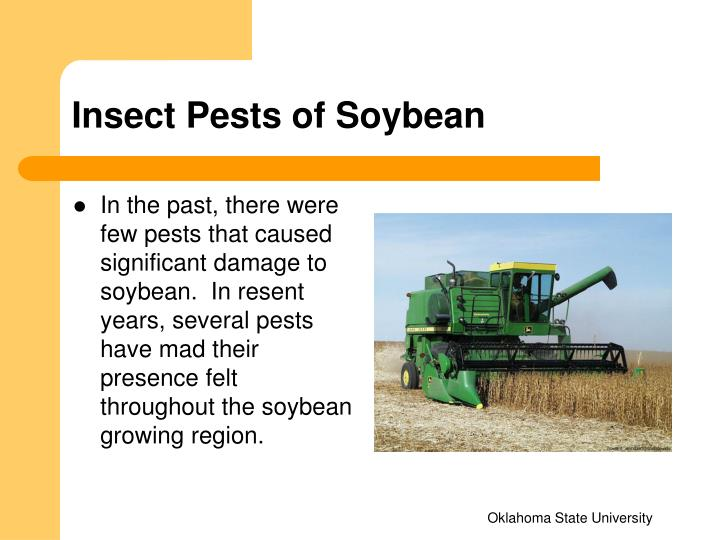Insect pests of soybean