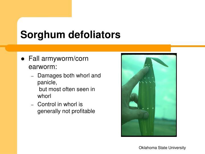 Sorghum defoliators