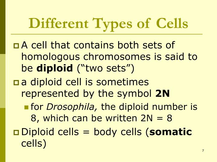 Different Types of Cells