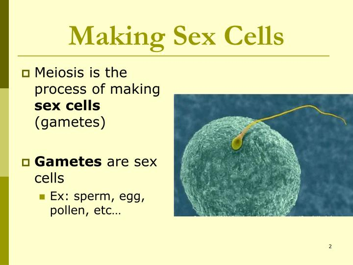 Making Sex Cells