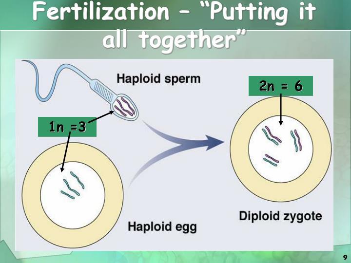 "Fertilization – ""Putting it all together"""