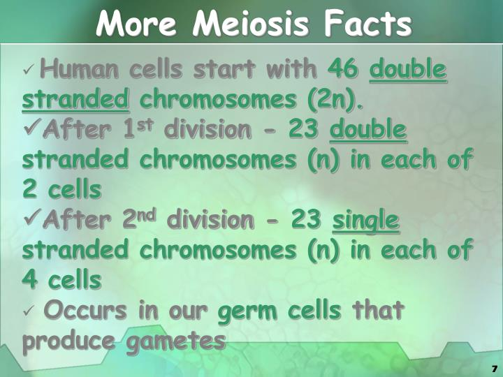 More Meiosis Facts