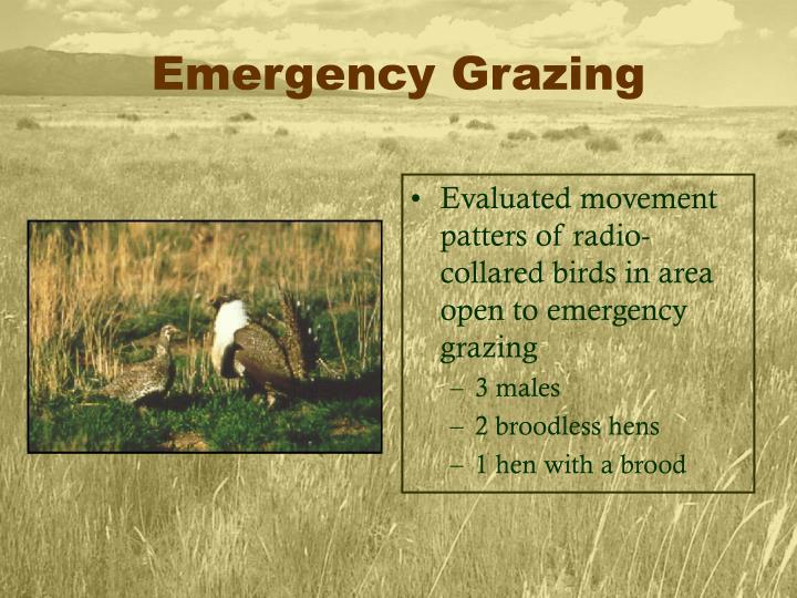 Emergency Grazing