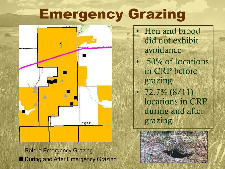 Before Emergency Grazing