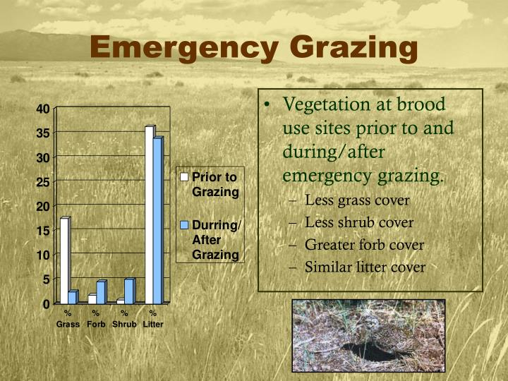 Emergency Grazing