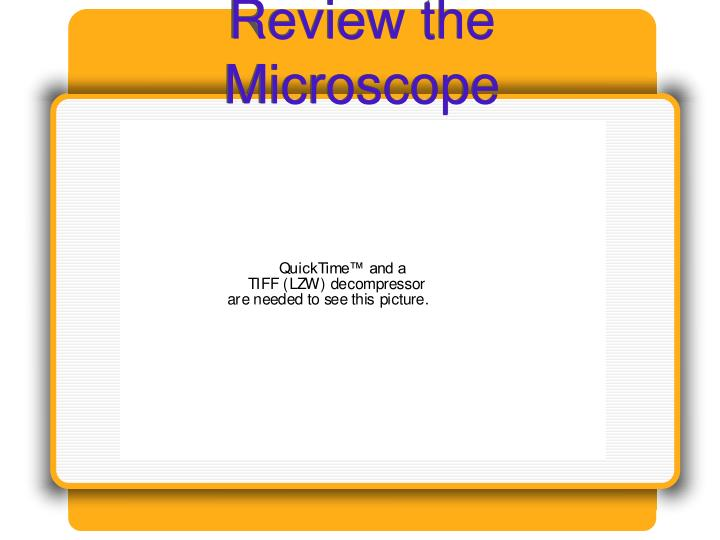 Review the microscope