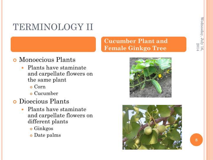 TERMINOLOGY II