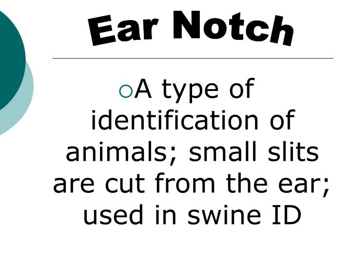 Ear Notch