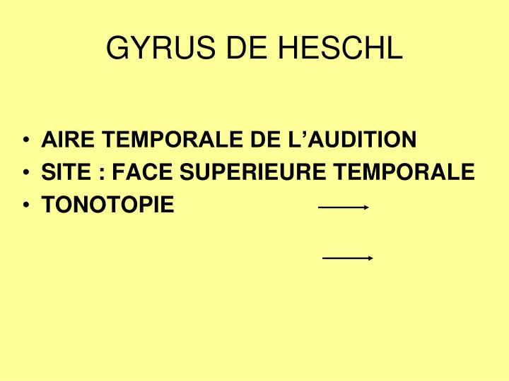 GYRUS DE HESCHL