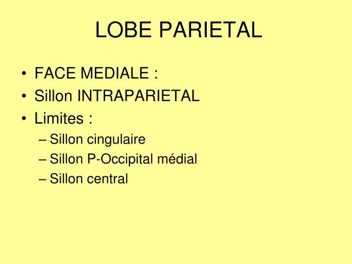 LOBE PARIETAL