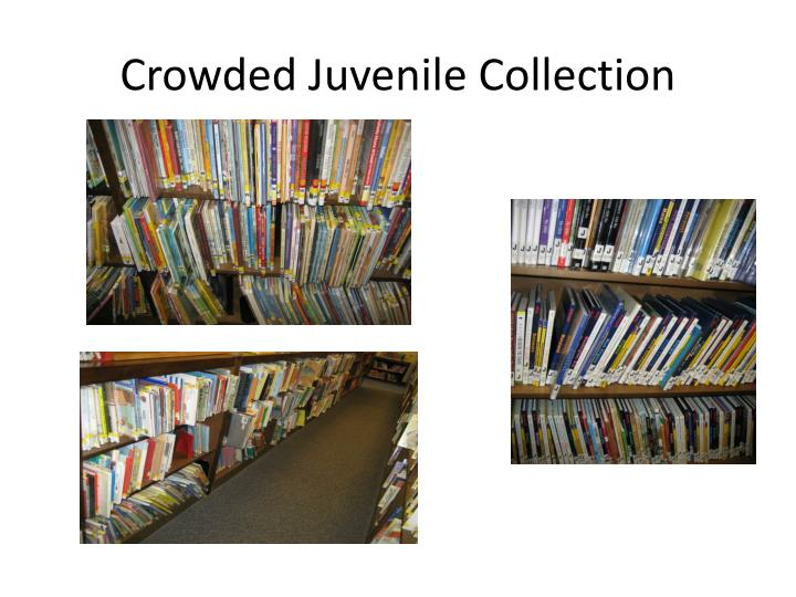 Crowded Juvenile Collection