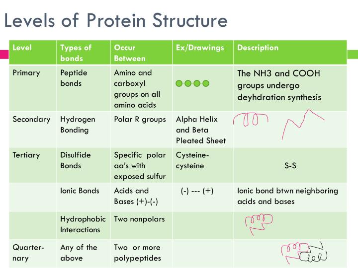 Ppt Proteins Powerpoint Presentation Id 1828850