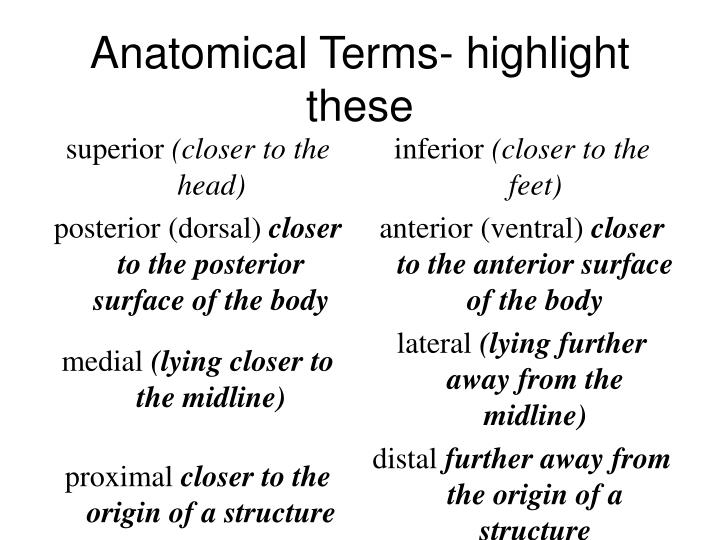 Anatomical Terms- highlight these