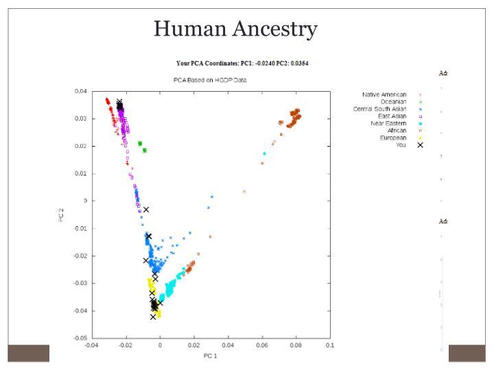 Human Ancestry