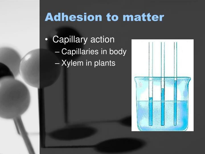 Adhesion to matter