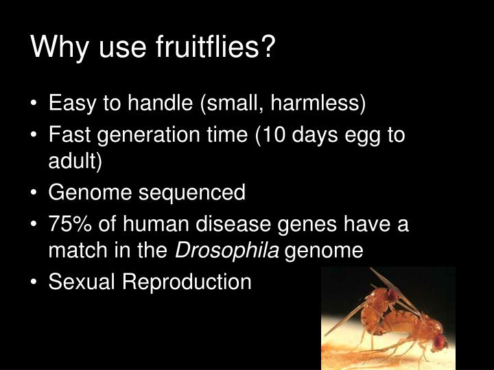 Why use fruitflies?