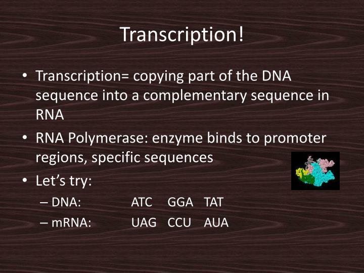 Transcription!