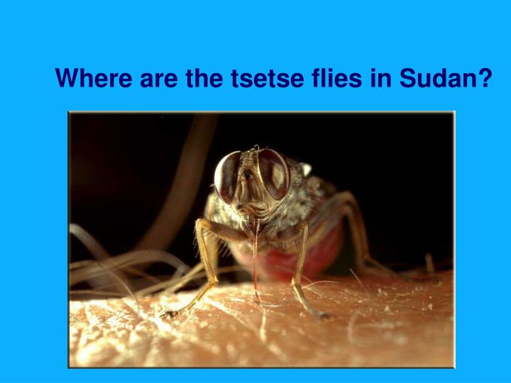 Where are the tsetse flies in Sudan?