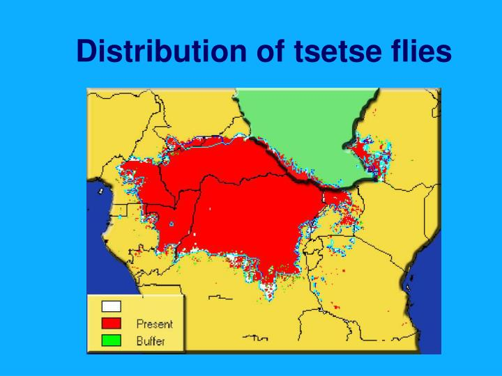 Distribution of tsetse flies