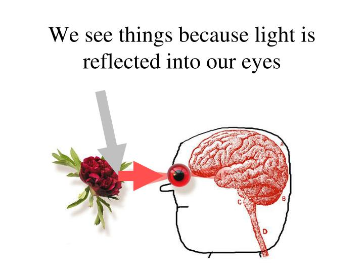 We see things because light is reflected into our eyes