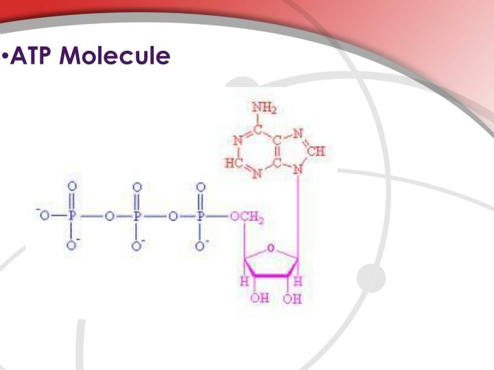 ATP Molecule