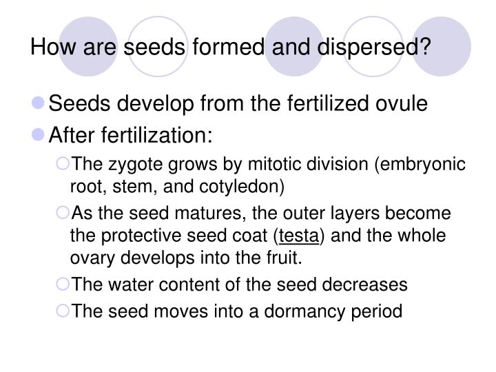 How are seeds formed and dispersed?