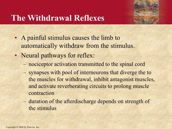 The Withdrawal Reflexes
