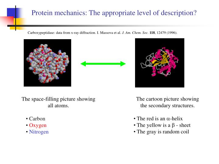Protein mechanics the appropriate level of description