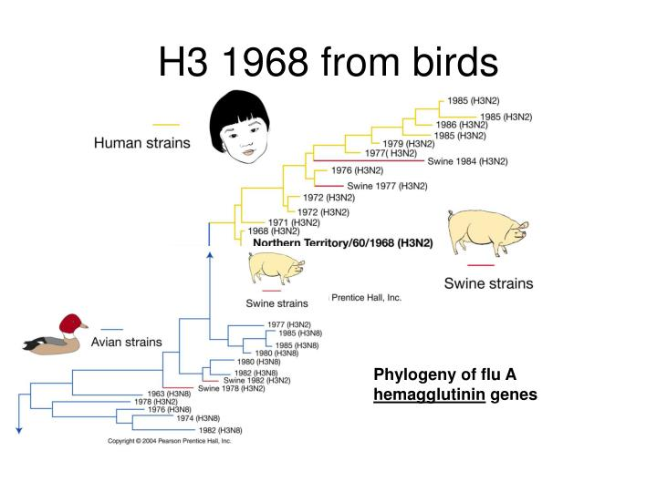 H3 1968 from birds