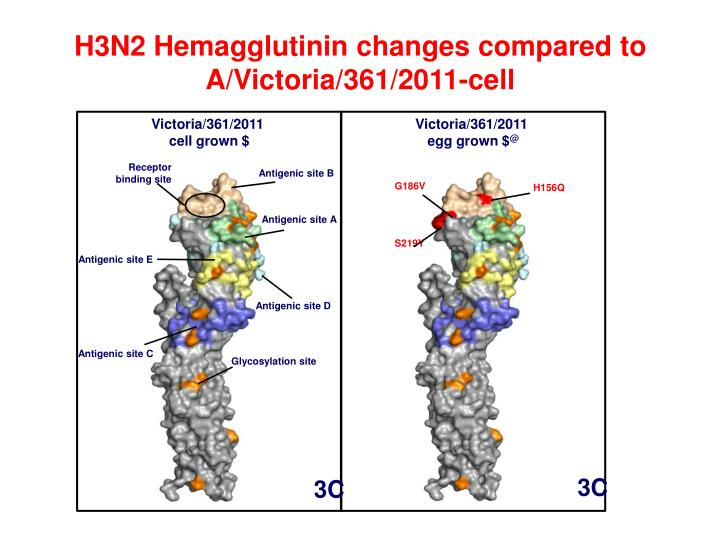 H3N2 Hemagglutinin changes compared to