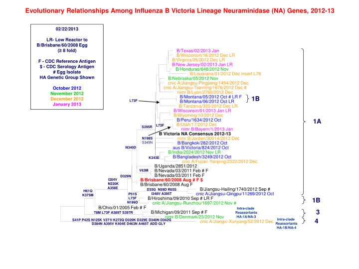 Evolutionary Relationships Among Influenza B Victoria Lineage Neuraminidase (NA) Genes, 2012-13