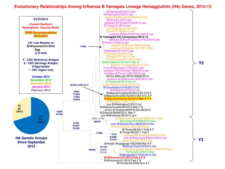 Evolutionary Relationships Among Influenza B Yamagata Lineage Hemagglutinin (HA) Genes, 2012-13