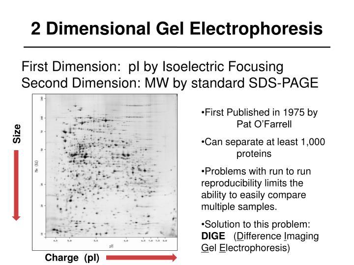 2 Dimensional Gel Electrophoresis