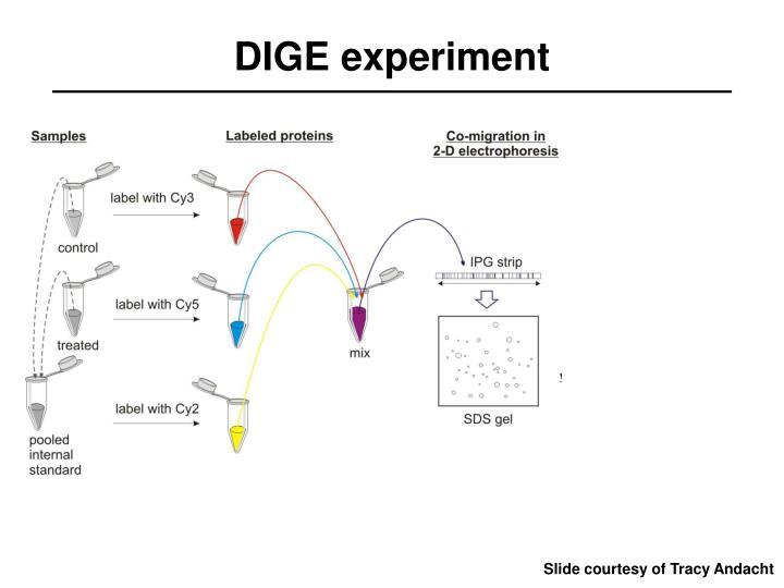 DIGE experiment
