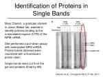 identification of proteins in single bands