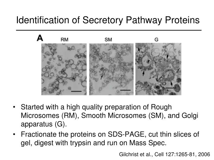 Identification of Secretory Pathway Proteins