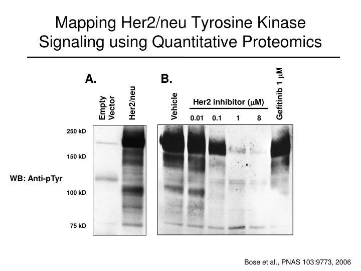 Mapping Her2/neu Tyrosine Kinase  Signaling using Quantitative Proteomics
