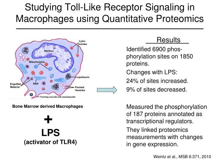 Studying Toll-Like Receptor Signaling in Macrophages using Quantitative Proteomics