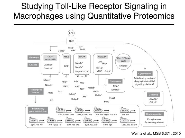 Studying Toll-Like Receptor Signaling in Macrophages using Quantitative Proteomics