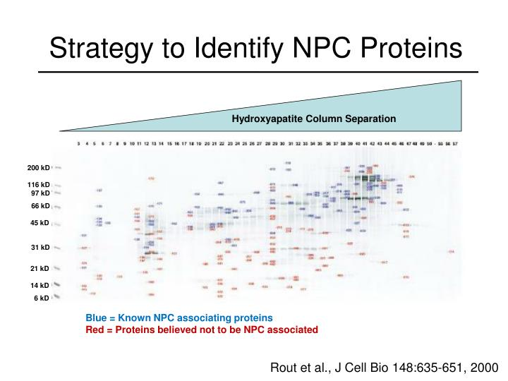 Strategy to Identify NPC Proteins