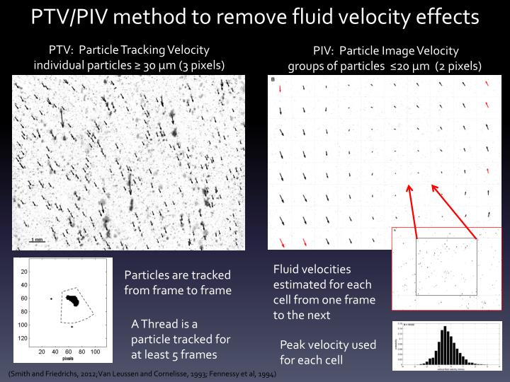 PTV/PIV method to remove fluid velocity effects