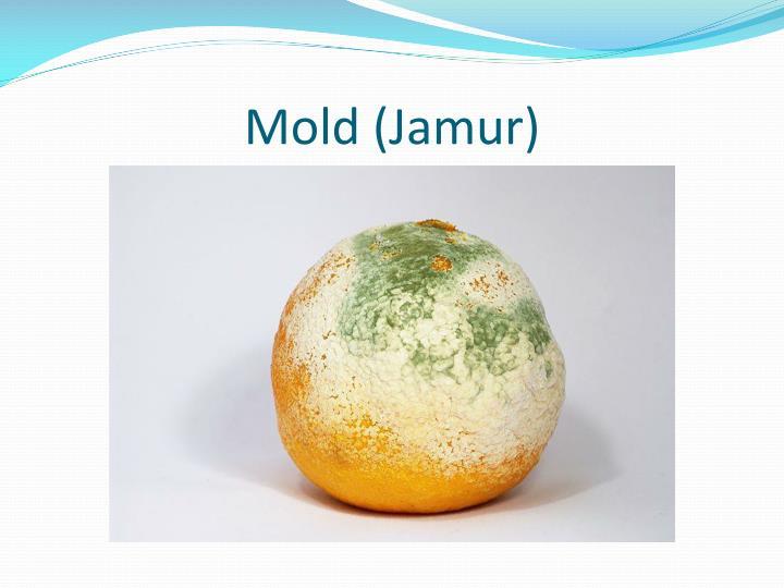 Mold (Jamur)