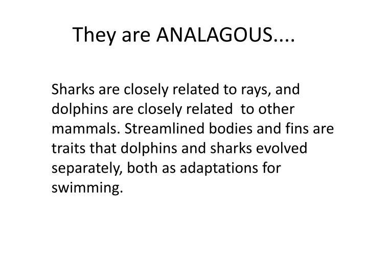 understanding evolution homology and analogy pdf