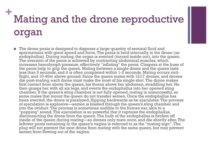 Mating and the drone reproductive organ