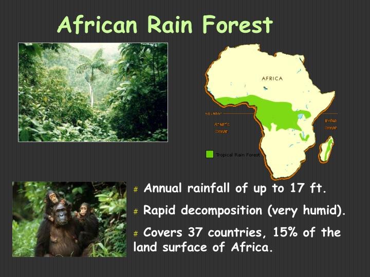 African Rain Forest