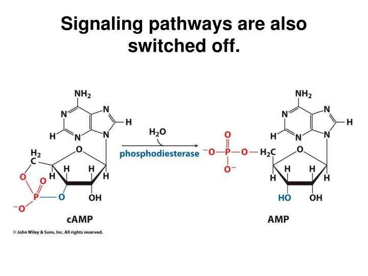 Signaling pathways are also switched off.