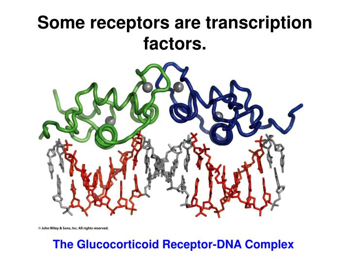 Some receptors are transcription factors.