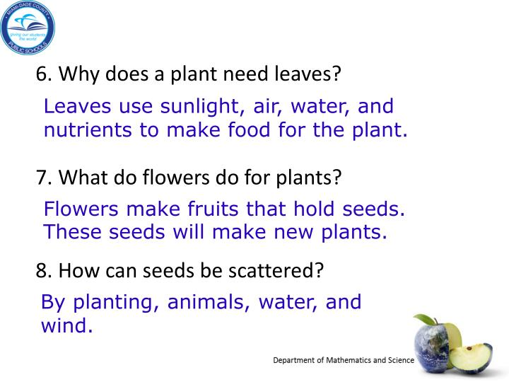 6. Why does a plant need leaves?