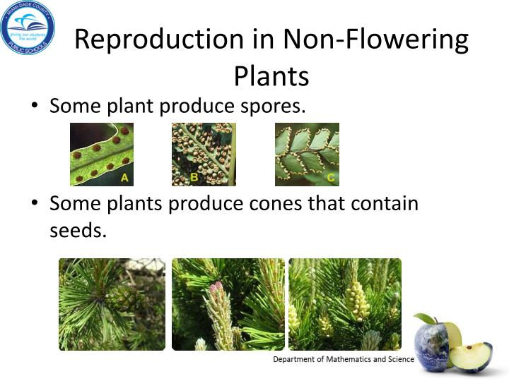 Reproduction in Non-Flowering Plants