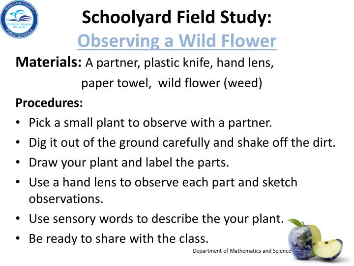 Schoolyard field study observing a wild flower